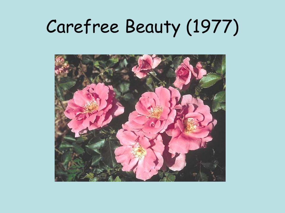 Carefree Beauty (1977)