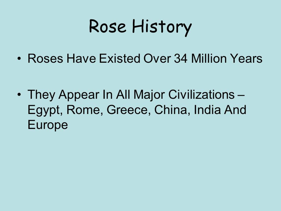 Rose History Roses Have Existed Over 34 Million Years They Appear In All Major Civilizations – Egypt, Rome, Greece, China, India And Europe