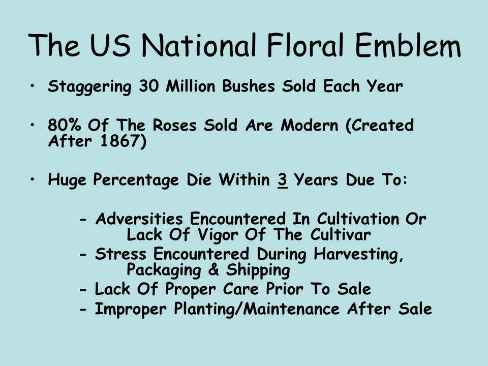 The US National Floral Emblem Staggering 30 Million Bushes Sold Each Year 80% Of The Roses Sold Are Modern (Created After 1867) Huge Percentage Die Wi
