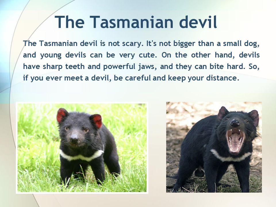 The Tasmanian devil The Tasmanian devil is not scary.