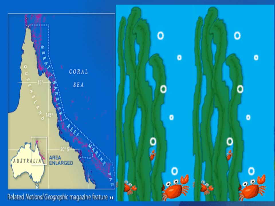 48 The Great Barrier Reef extends 1, 200 miles along Australia's northeast coast through the Coral Sea.The Great Barrier Reef extends 1, 200 miles along Australia's northeast coast through the Coral Sea.