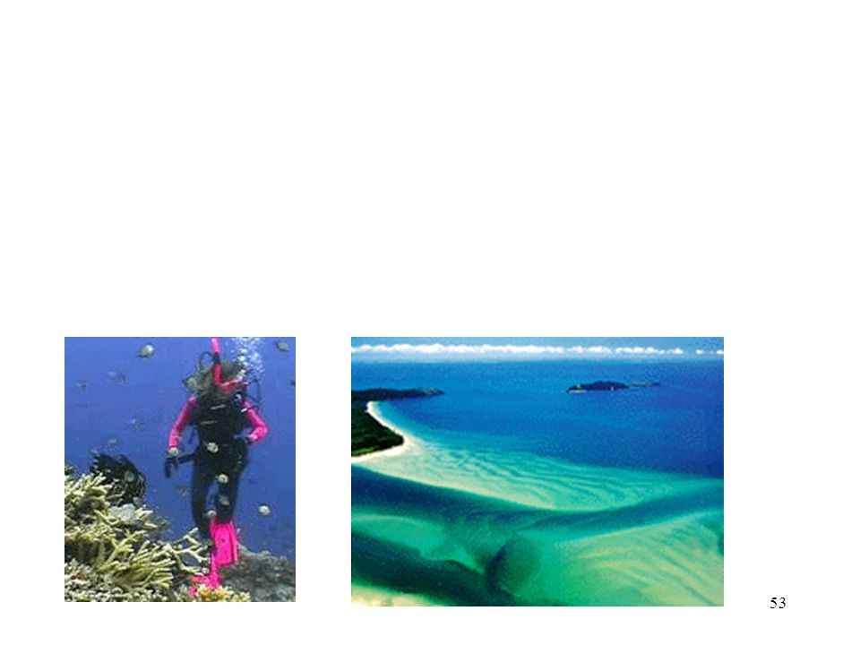 52  The beauty of the reef also attracts thousands of human visitors each year.