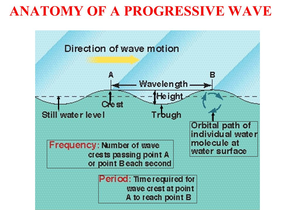 DESCRIPTION OF A WAVE FORM crests = high, linear, subparallel ridges of a wave train (= series of waves) troughs = low, linear, subparallel depressions between the crests of a wave train wavelength (in m) = Lor (= lambda) wave height (in m) = H (highest measured ~ 25-30 m) (This is not the same as amplitude.) amplitude = one-half the wave height (H/2) velocity (in m/s) = V (This is a length or distance divided by time.)