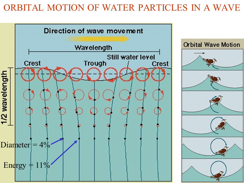 LARGER WAVES HAVE MUCH MORE ENERGY Wave energy 0 0Wavelength Swell Waves generated by 40 km/h winds generated by 80 km/h winds greater wave height