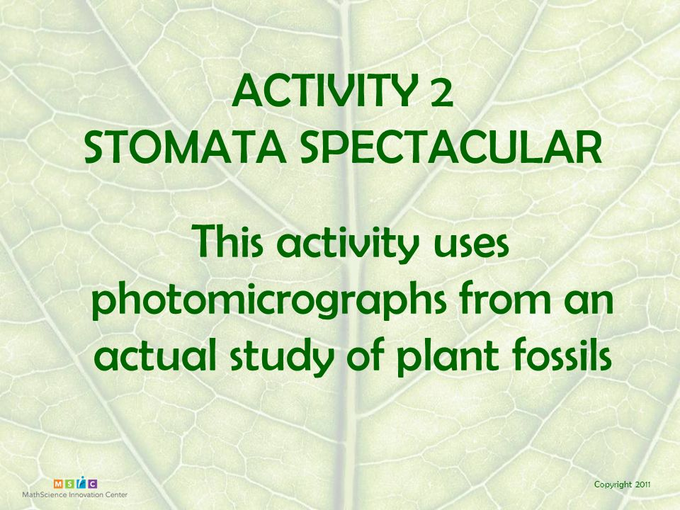 Copyright 2011 Each team member will count stomata in one of the three areas of a slide The team will calculate the average of the three counts & divide it by the area of the microscope field to find STOMATAL DENSITY (avg./area ) high value = lots of stomata = low CO 2 low value = fewer stomata = high CO 2