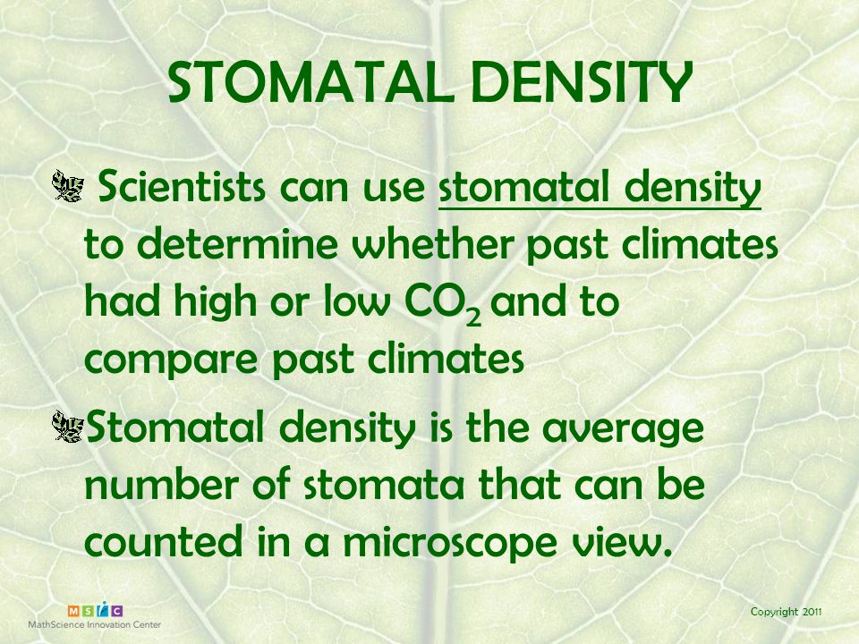 Copyright 2011 How do scientists count stomata? 400X