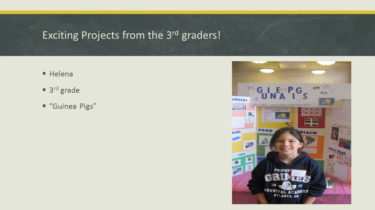 Exciting Projects from the 3 rd graders!  Helena  3 rd grade  Guinea Pigs