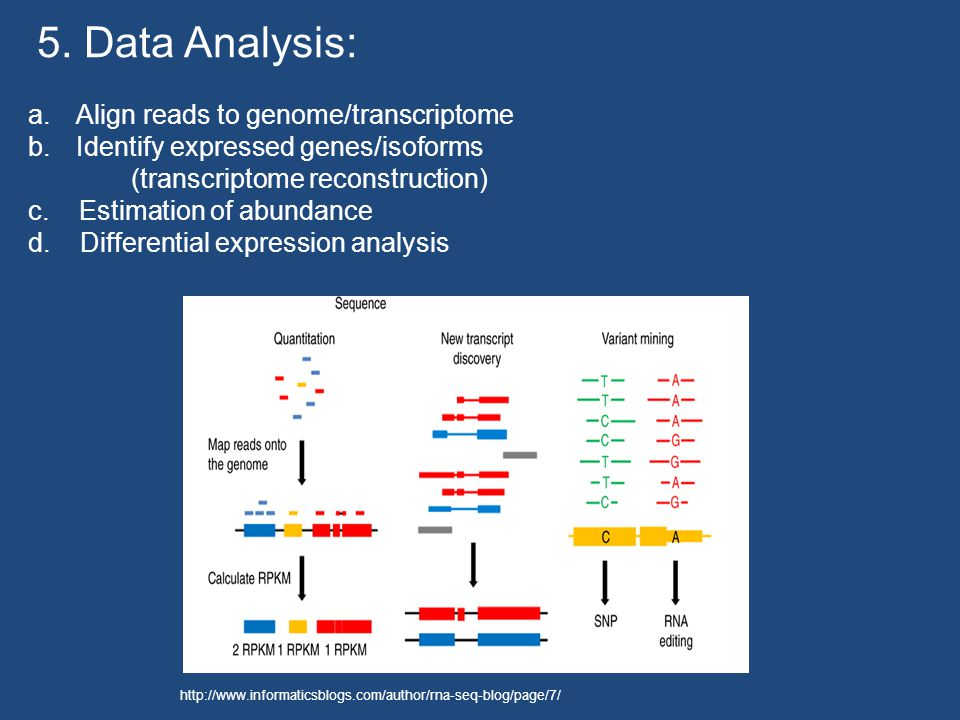 a.Align reads to genome/transcriptome b.Identify expressed genes/isoforms (transcriptome reconstruction) c.