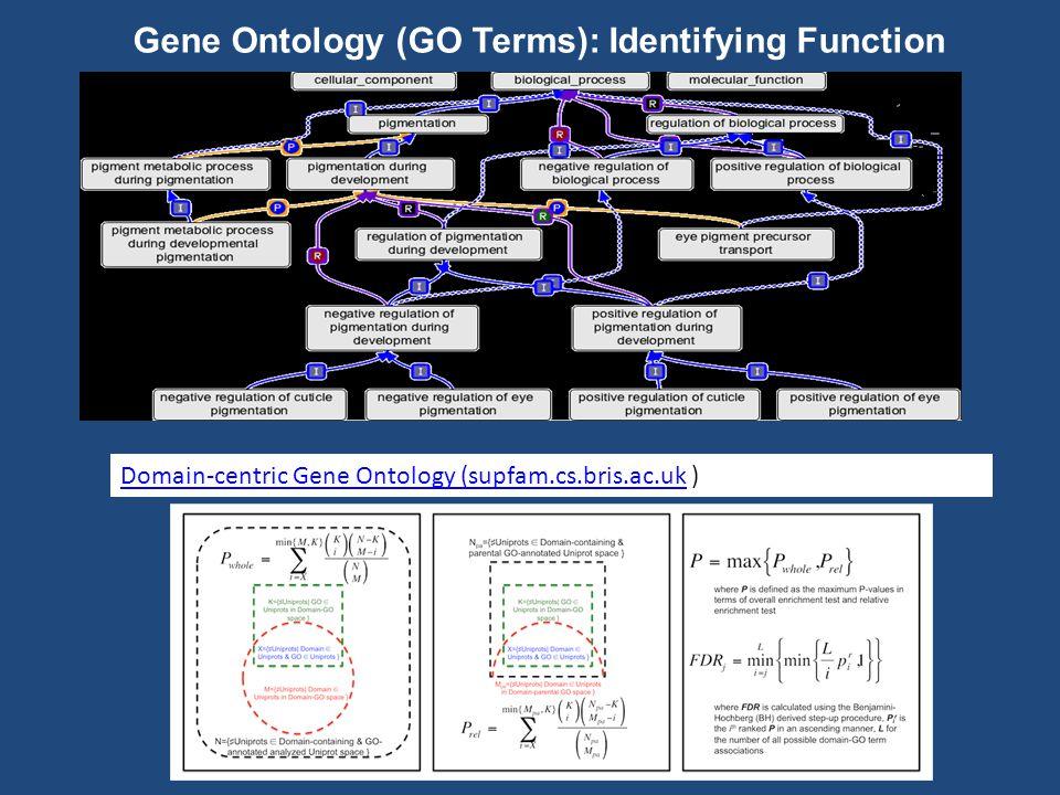 Domain-centric Gene Ontology (supfam.cs.bris.ac.ukDomain-centric Gene Ontology (supfam.cs.bris.ac.uk ) Gene Ontology (GO Terms): Identifying Function