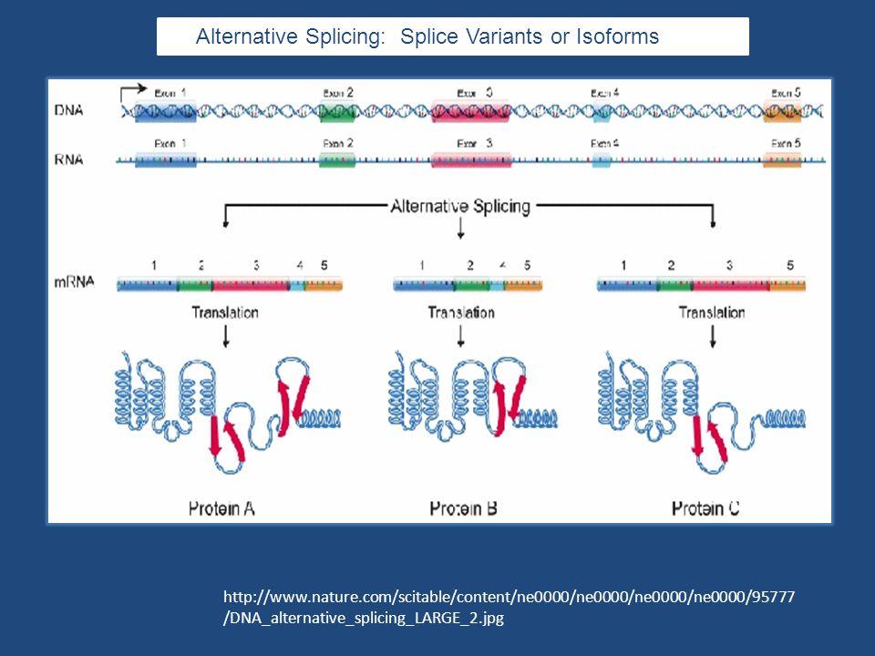 http://www.nature.com/scitable/content/ne0000/ne0000/ne0000/ne0000/95777 /DNA_alternative_splicing_LARGE_2.jpg Alternative Splicing: Splice Variants or Isoforms