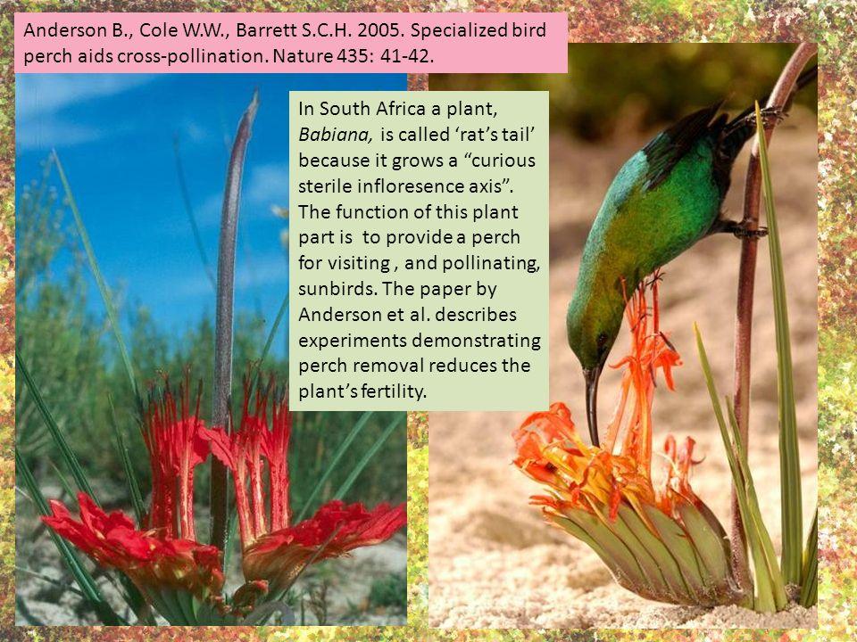 Anderson B., Cole W.W., Barrett S.C.H. 2005. Specialized bird perch aids cross-pollination.
