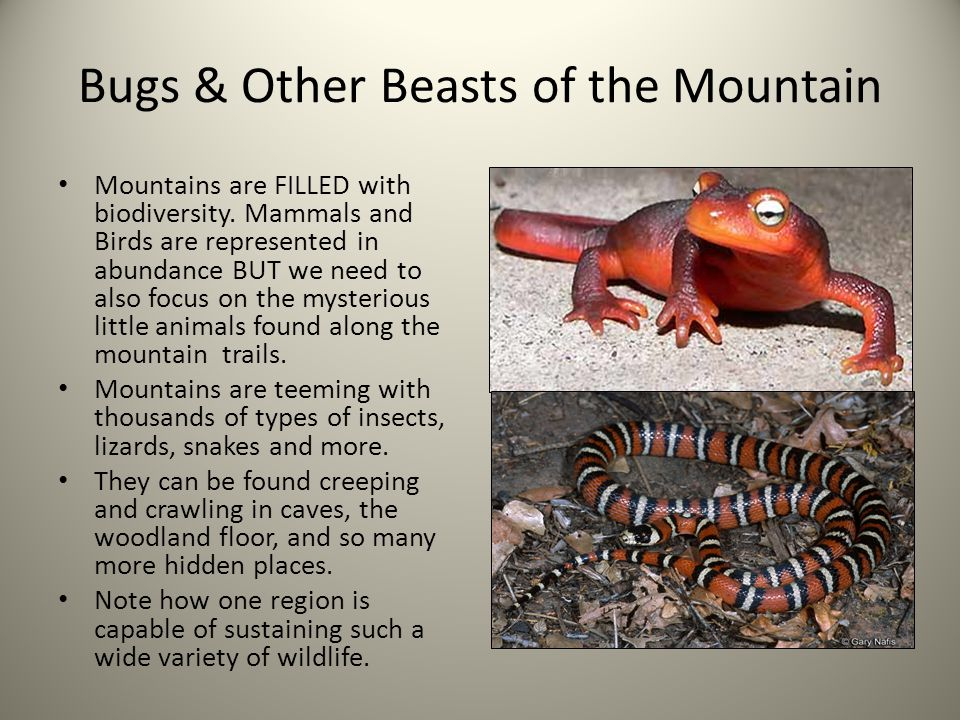 Bugs & Other Beasts of the Mountain Mountains are FILLED with biodiversity.