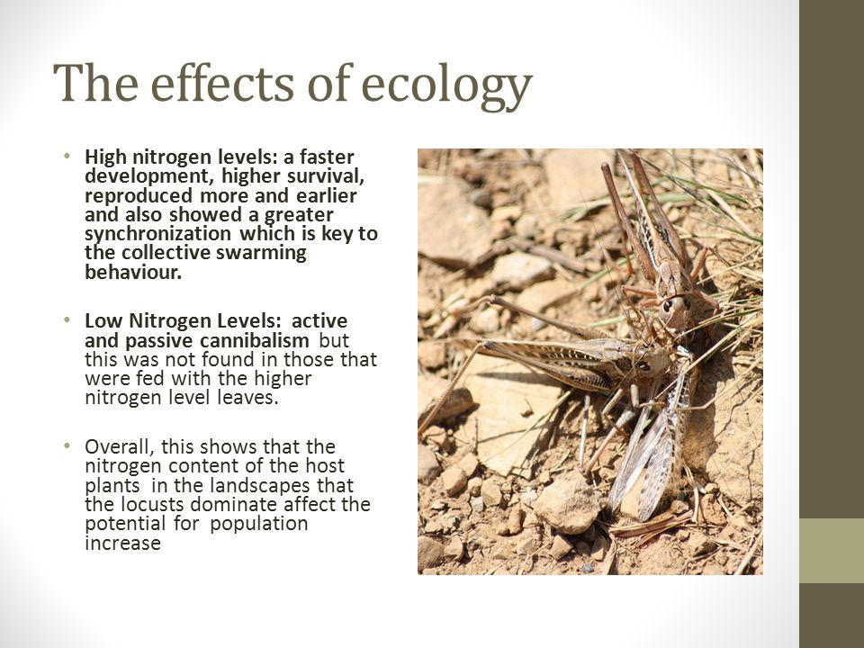 The effect of nitrogen