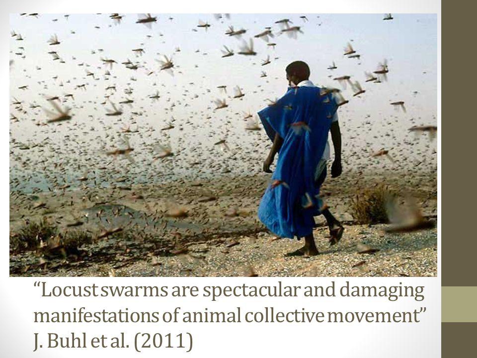Shapes, Dynamics and Behaviour Types of swarm: I.Columnar II.Frontal structures  Australian Plague Locust (Chortoicetes terminifera)  Desert Locust (Schistocerca gregaria)  Rhammacocerus schistocercoides
