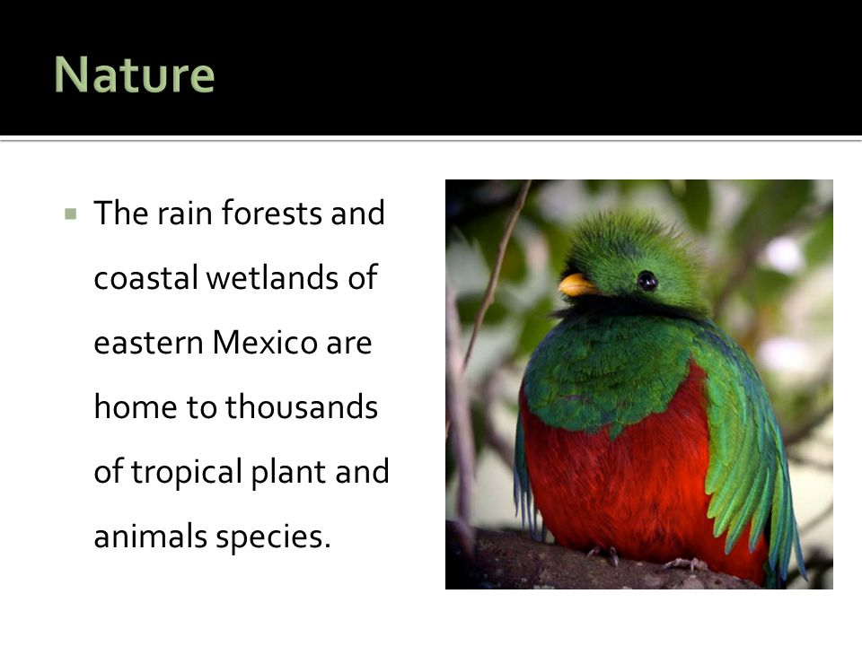  The rain forests and coastal wetlands of eastern Mexico are home to thousands of tropical plant and animals species.