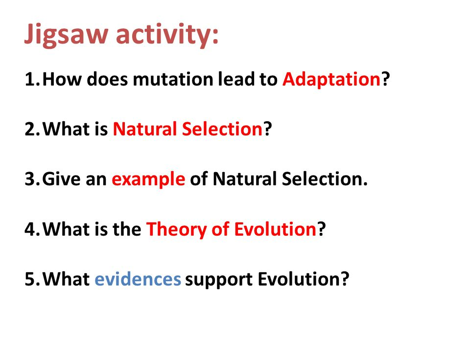 Jigsaw activity: 1.How does mutation lead to Adaptation? 2.What is Natural Selection? 3.Give an example of Natural Selection. 4.What is the Theory of