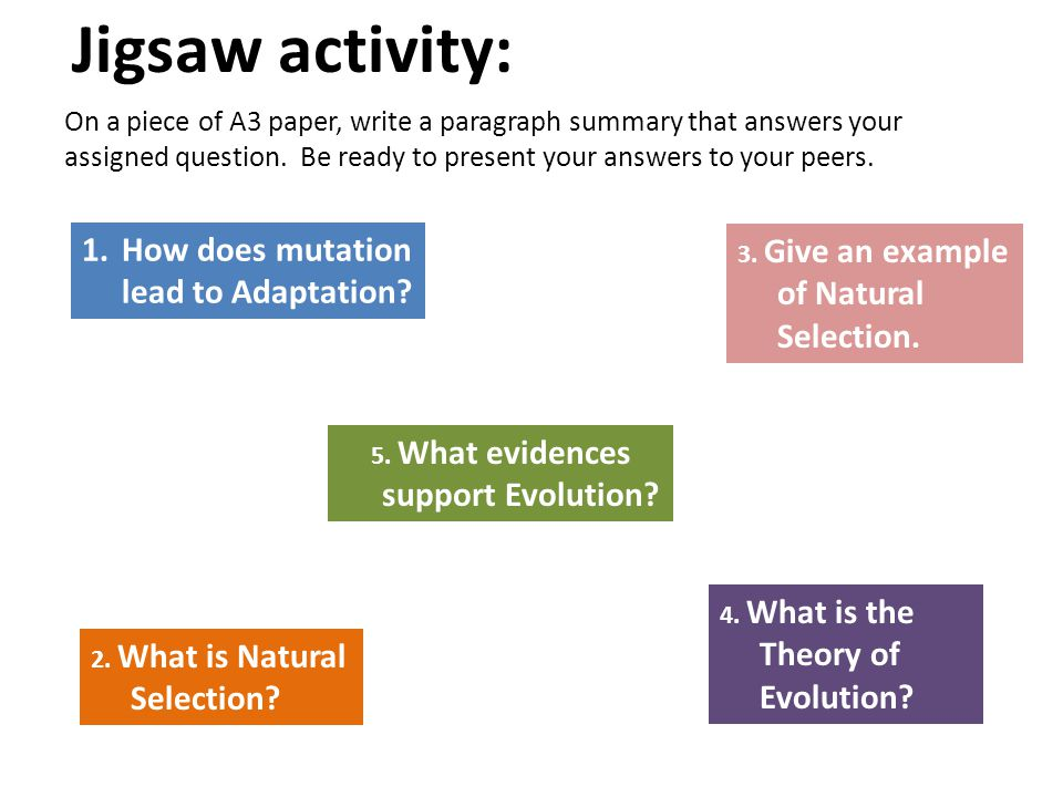 Jigsaw activity: 1.How does mutation lead to Adaptation? 2. What is Natural Selection? 3. Give an example of Natural Selection. 4. What is the Theory
