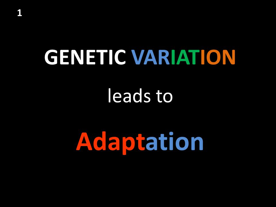 GENETIC VARIATION leads to Adaptation 1