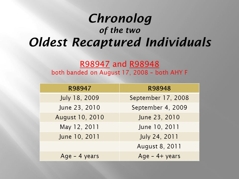 Chronolog of the two Oldest Recaptured Individuals R98947 and R98948 both banded on August 17, 2008 – both AHY F R98947R98948 July 18, 2009September 17, 2008 June 23, 2010September 4, 2009 August 10, 2010June 23, 2010 May 12, 2011June 10, 2011 July 24, 2011 August 8, 2011 Age – 4 yearsAge – 4+ years