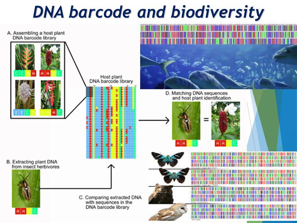 DNA barcode and biodiversity