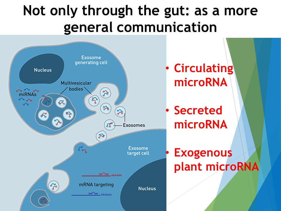 Not only through the gut: as a more general communication Circulating microRNA Secreted microRNA Exogenous plant microRNA