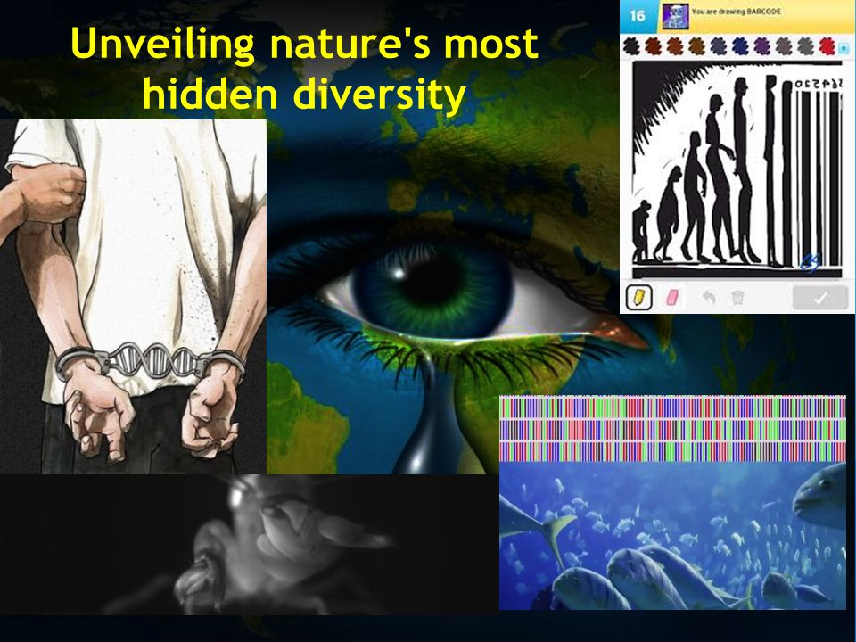 DNA barcode and biodiversity uses a short genetic marker in an organism s DNA to identify it as belonging to a particular species