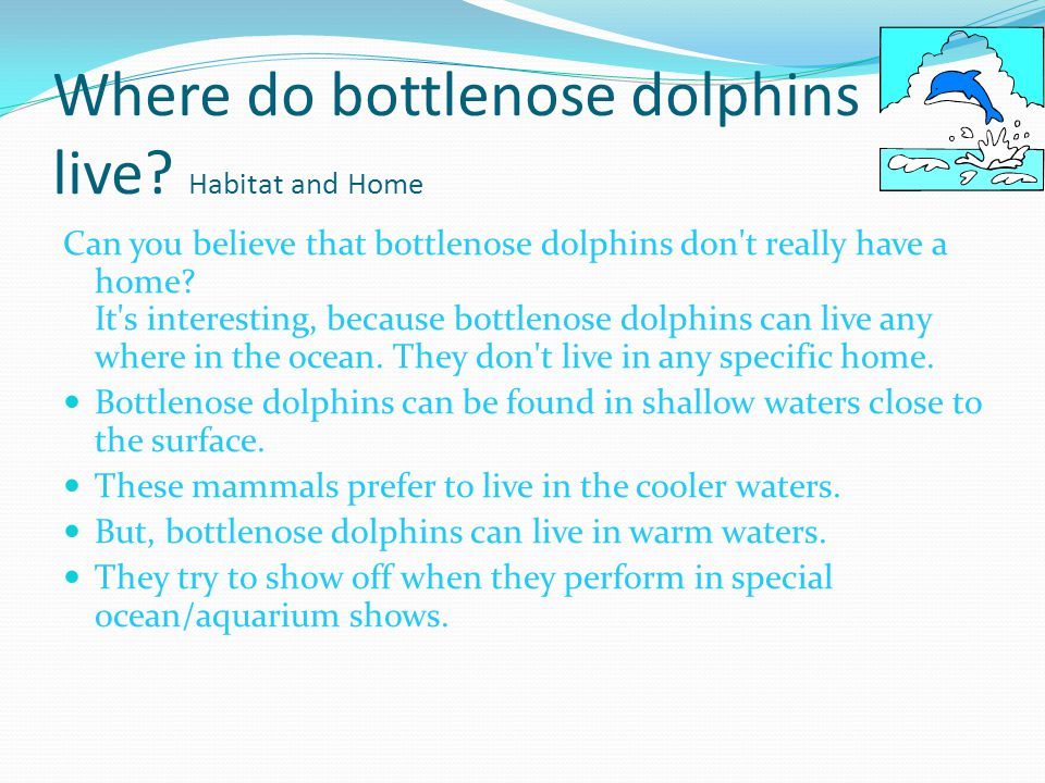 Where do bottlenose dolphins live.