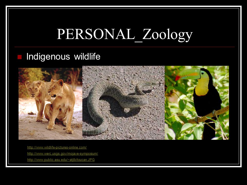 PERSONAL_Zoology Indigenous wildlife http://www.wildlife-pictures-online.com/ http://www.werc.usgs.gov/mojave-symposium/ http://www.public.asu.edu/~atjlb/toucan.JPG
