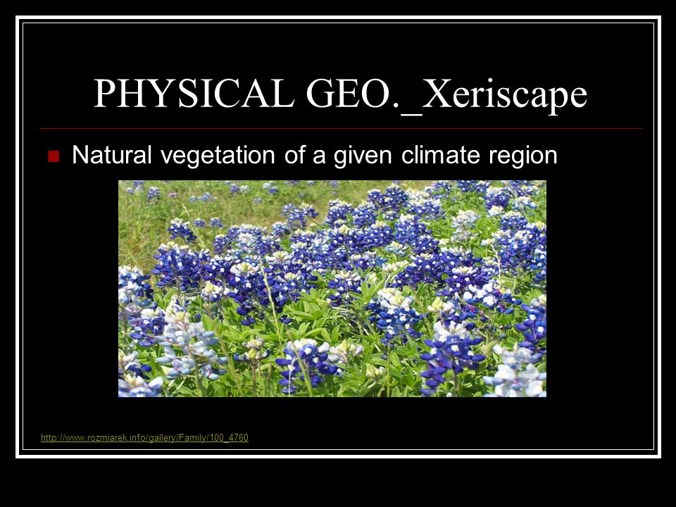 PHYSICAL GEO._Xeriscape Natural vegetation of a given climate region http://www.rozmiarek.info/gallery/Family/100_4760