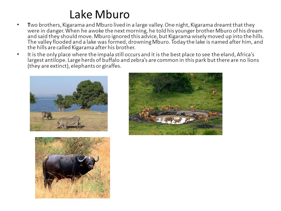 Lake Mburo Two brothers, Kigarama and Mburo lived in a large valley.