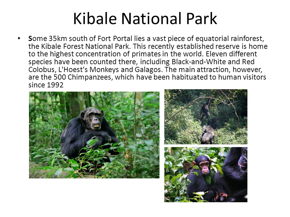 Kibale National Park Some 35km south of Fort Portal lies a vast piece of equatorial rainforest, the Kibale Forest National Park.