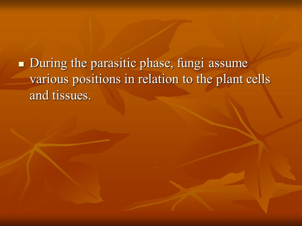 During the parasitic phase, fungi assume various positions in relation to the plant cells and tissues.