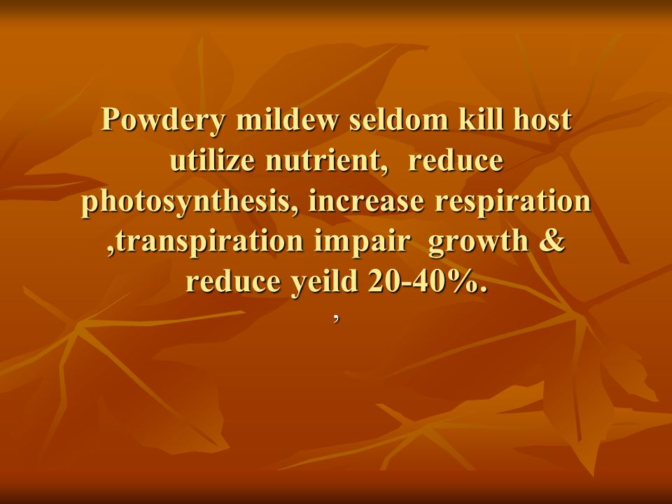 Powdery mildew of Rose Attack bud, young leaves & growing tips weakening of plant reduced flowers Attack bud, young leaves & growing tips weakening of plant reduced flowers