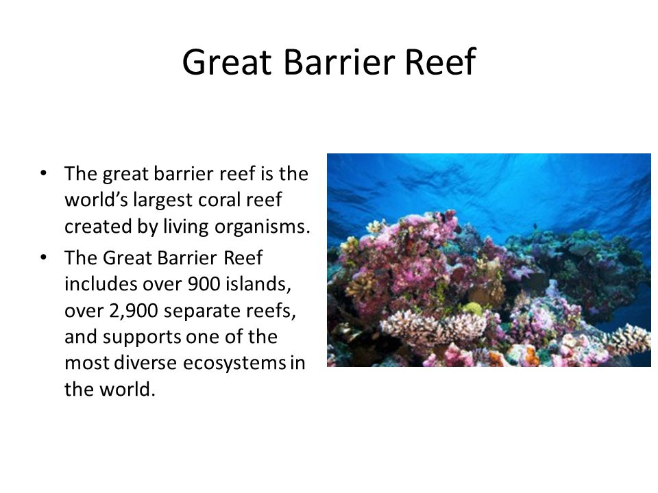 Great Barrier Reef The great barrier reef is the world's largest coral reef created by living organisms.