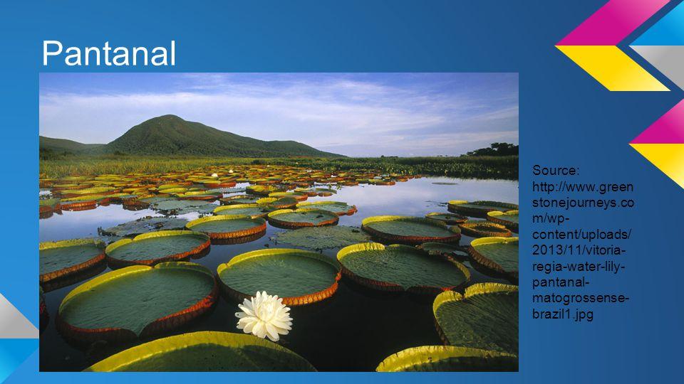 Pantanal Source: http://www.green stonejourneys.co m/wp- content/uploads/ 2013/11/vitoria- regia-water-lily- pantanal- matogrossense- brazil1.jpg