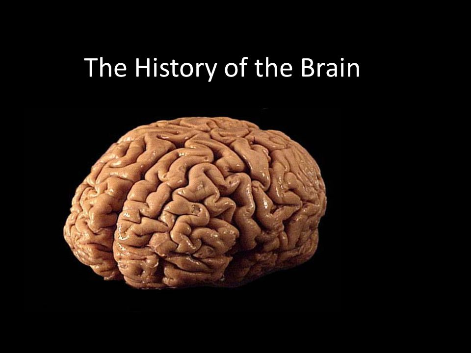 The History of the Brain