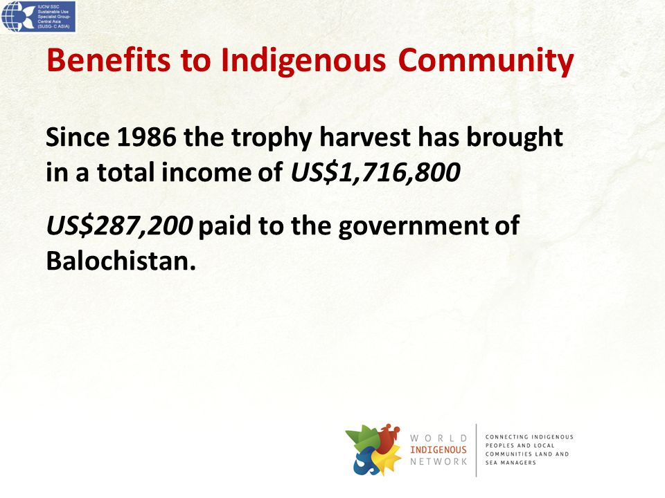 Benefits to Indigenous Community Since 1986 the trophy harvest has brought in a total income of US$1,716,800 US$287,200 paid to the government of Balochistan.