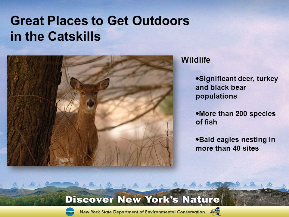 Great Places to Get Outdoors in the Catskills Wildlife  Significant deer, turkey and black bear populations  More than 200 species of fish  Bald ea