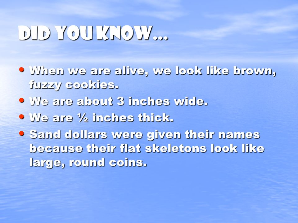 Did you know… When we are alive, we look like brown, fuzzy cookies.