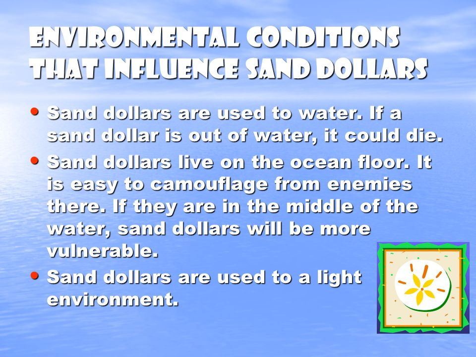 Environmental Conditions that influence Sand Dollars Sand dollars are used to water.