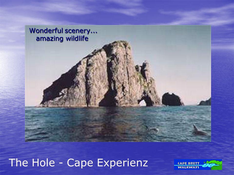 Wonderful scenery... amazing wildlife amazing wildlife The Hole - Cape Experienz