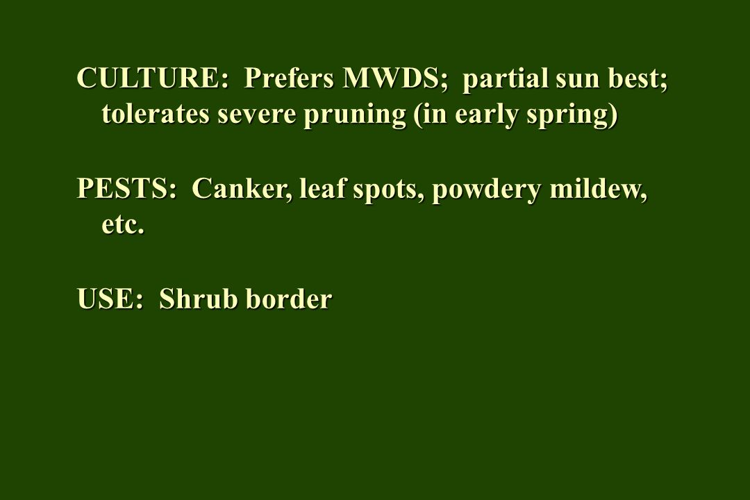 CULTURE: Prefers MWDS; partial sun best; tolerates severe pruning (in early spring) PESTS: Canker, leaf spots, powdery mildew, etc.