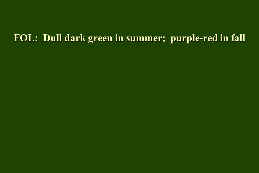 FOL: Dull dark green in summer; purple-red in fall