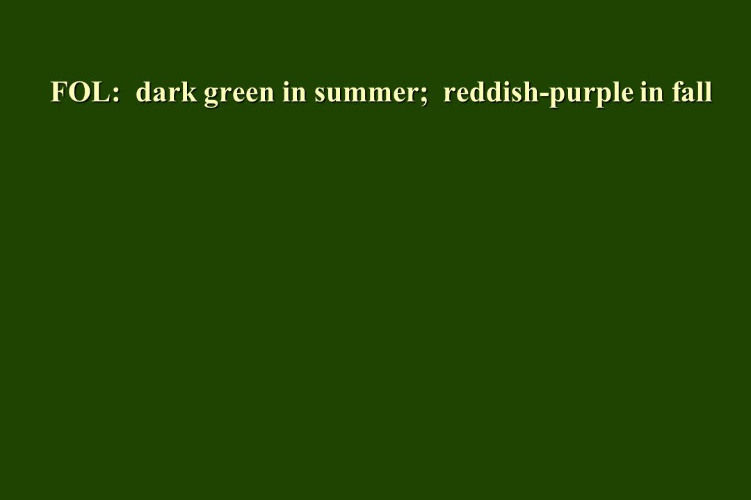FOL: dark green in summer; reddish-purple in fall