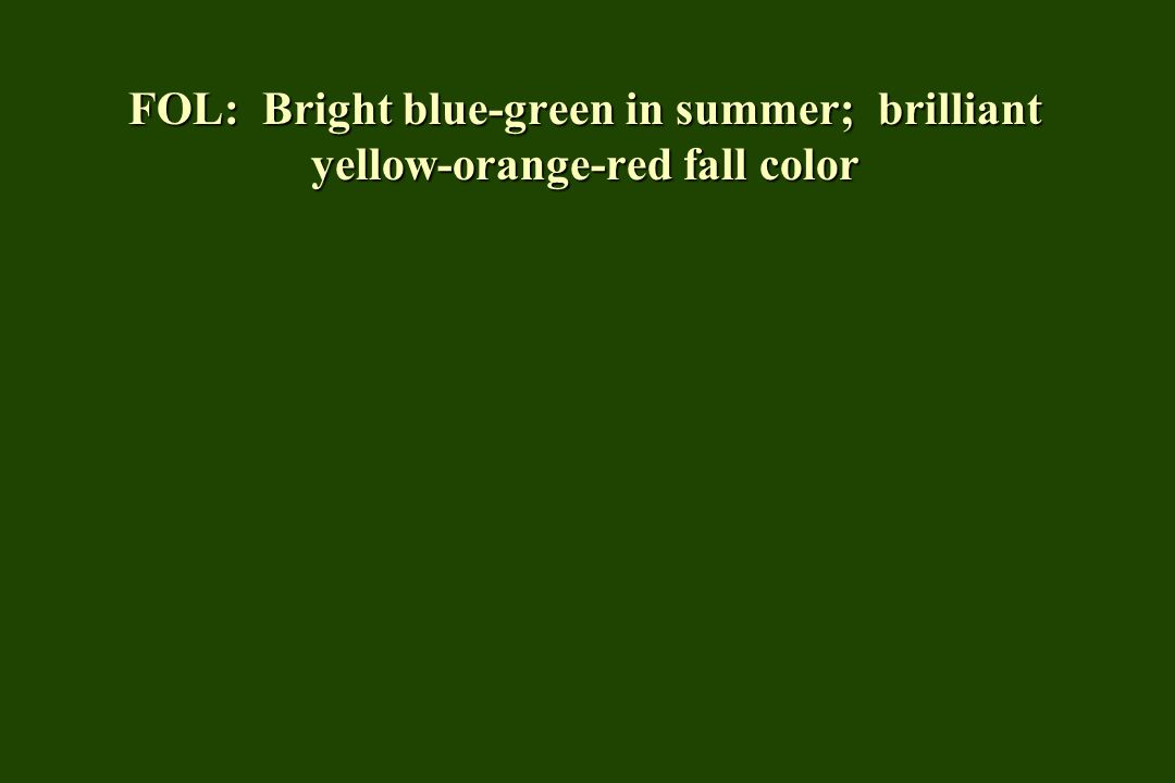 FOL: Bright blue-green in summer; brilliant yellow-orange-red fall color