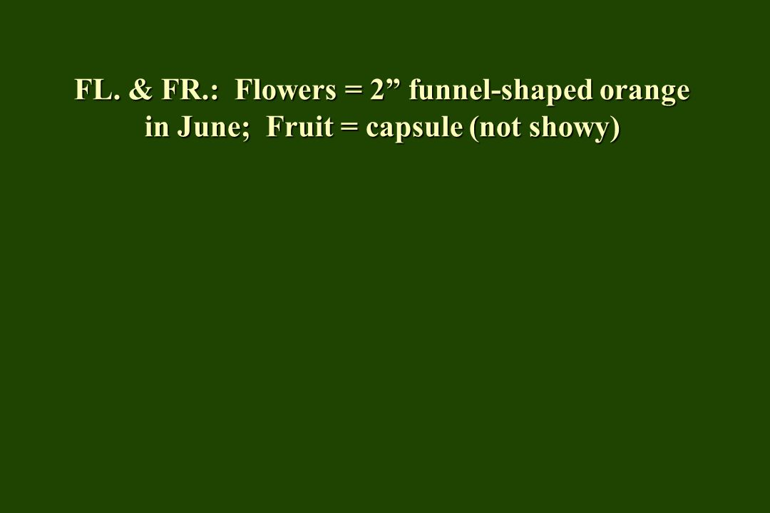 FL. & FR.: Flowers = 2 funnel-shaped orange in June; Fruit = capsule (not showy)