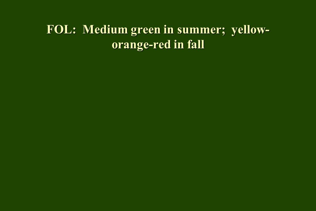 FOL: Medium green in summer; yellow- orange-red in fall