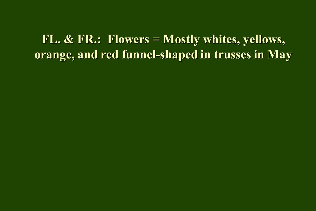 FL. & FR.: Flowers = Mostly whites, yellows, orange, and red funnel-shaped in trusses in May