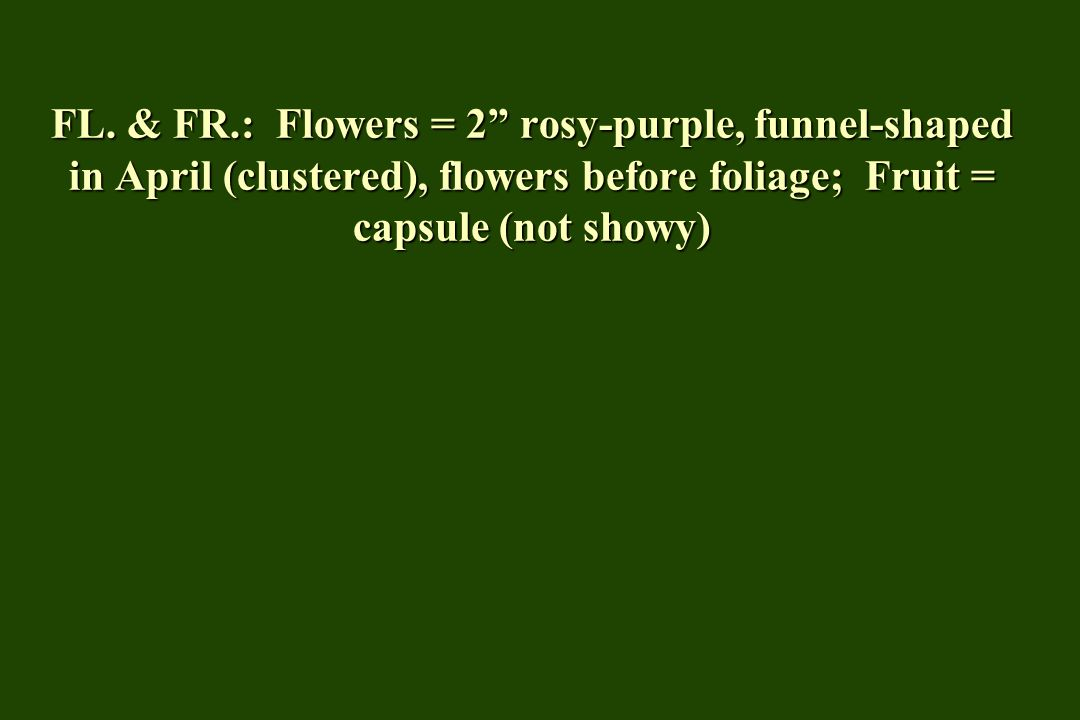 "FL. & FR.: Flowers = 2"" rosy-purple, funnel-shaped in April (clustered), flowers before foliage; Fruit = capsule (not showy)"