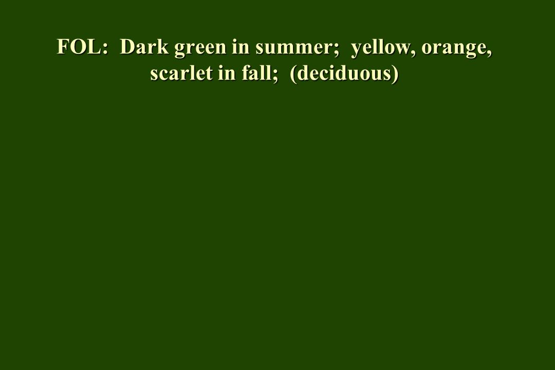 FOL: Dark green in summer; yellow, orange, scarlet in fall; (deciduous)